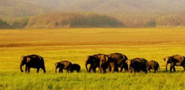 Dschungel Safari im Corbett Nationalpark
