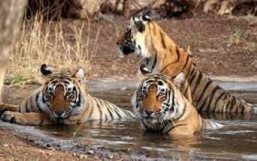 Best summer safari in India