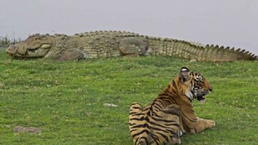 Panna Nationalpark
