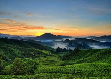 Visit Munnar and the tea plantations
