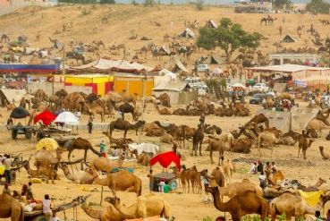 Pushkar camel fair and Golden Triangle tour package