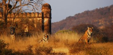 Visite et safari en jeep au parc national de Ranthambore